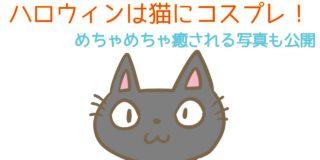 ハロウィンは猫にコスプレさせよう!のサムネイル